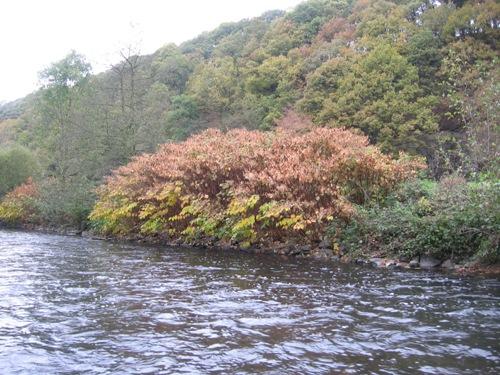 Herbst an der Wupper