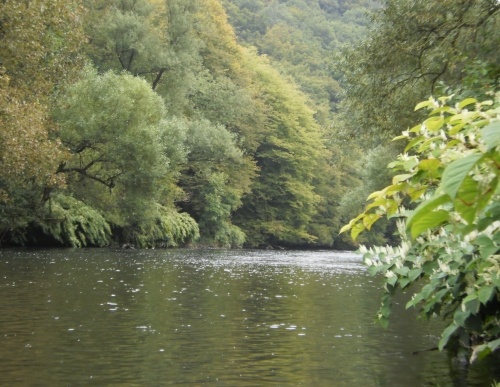 Wupper in Wipperaue